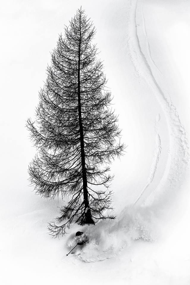 Photo of La curva in neve fresca attorno all'albero